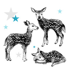 3 hand drawn baby deers in vintage style vector