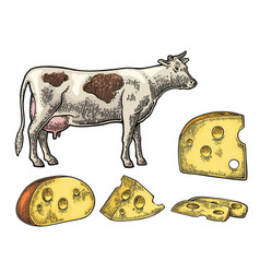 Pieces of cheese half round head and triangle of vector