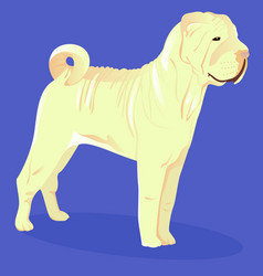 Chinese shar pei white dog vector