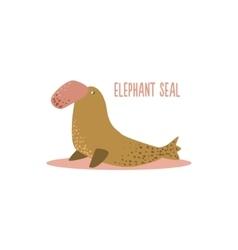 Elephant seal vector