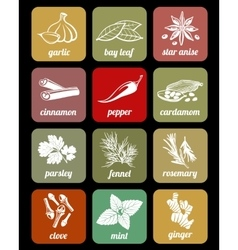 Herbs and spices cook culinary ingredients vector