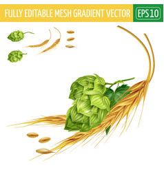 Hops and malt on white background vector