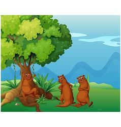 Three playful wild animals near the big old tree vector image