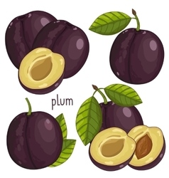 Plum isolated vector