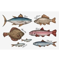 Seafood collection of fish such as tuna trout vector