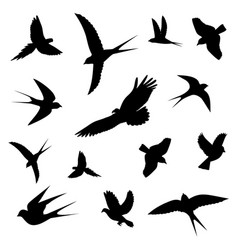 Birds in flight icons vector
