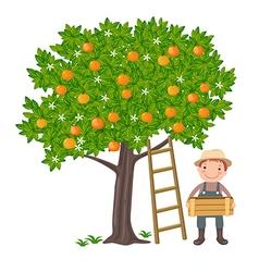 Boy picking oranges vector image vector image