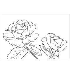 Rose flowers draft sketch outline hand drawing vector
