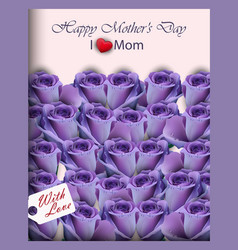 violet purple roses in a gift box realistic vector image vector image