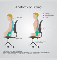 Anatomy of sitting vector