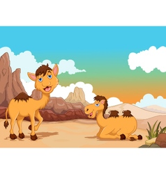 Funny two camel cartoon with desert landscape back vector