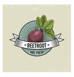 Beetroot vintage set of labels emblems or logo vector