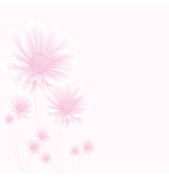 chamomile pink vector image