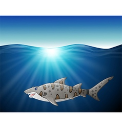 close up tiger shark on the sea vector image vector image