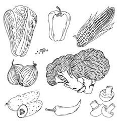 vegetables corn mushrooms doodle vector image vector image