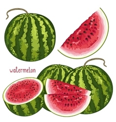 Watermelon isolated vector