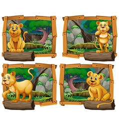 Four scenes of lion in the forest vector