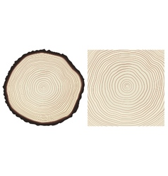 Colour saw cut pine tree trunk and tree rings vector