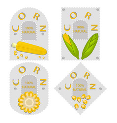 the corn vector image