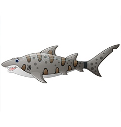 Close up tiger shark vector