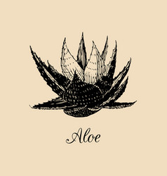 Aloe hand drawn agave sketch vector