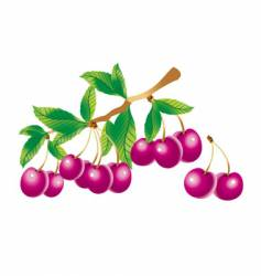 Sprig of cherry vector