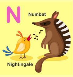 animal alphabet letter n-numbat nightingale vector image