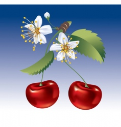 Cherry the fruit and flowers vector