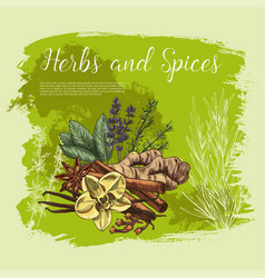 Herb and spice sketch poster healthy food design vector