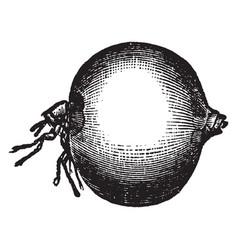 Jigger flea vintage vector