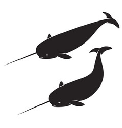 Narwhal vector