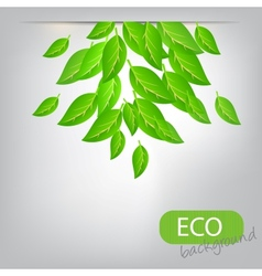 Eco leves background vector