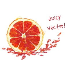 Drawing slice of grapefruit vector