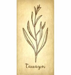 Tarragon ink sketch vector