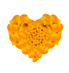 Orange french marigold flowers in a heart shape vector