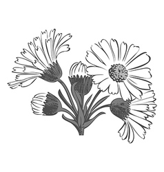Hand drawn bouquet of daisy flowers isolated vector