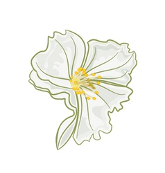 Jasmine flower isolated on a white background vector