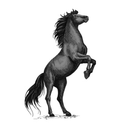 Rearing black horse sketch for equine sport design vector