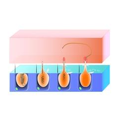 nematocys scheme vector image vector image