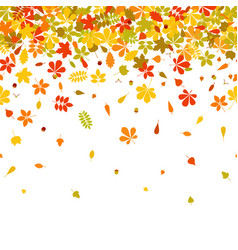 seamless border autumn falling leaf on white vector image vector image