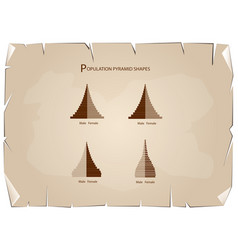 The 4 types of population pyramids graphs vector