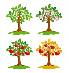 apple tree at different seasons vector image