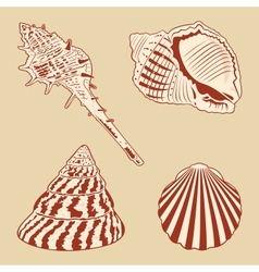 Vintage shells set eps10 vector