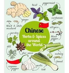 Chinese herbs and spices vector