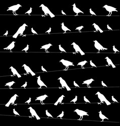 Birds on wires picture vector