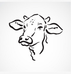cow head on white background farm animals vector image vector image