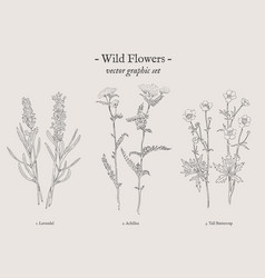 Wild flowers vintage set vector