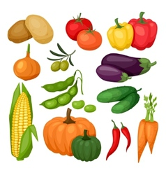Icon set of fresh ripe stylized vegetables vector