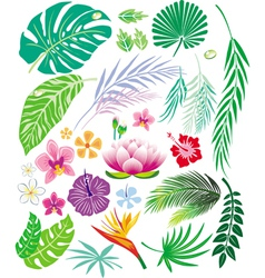 tropical leaf and flowers vector image