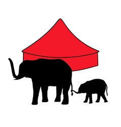 Elephants in circus vector